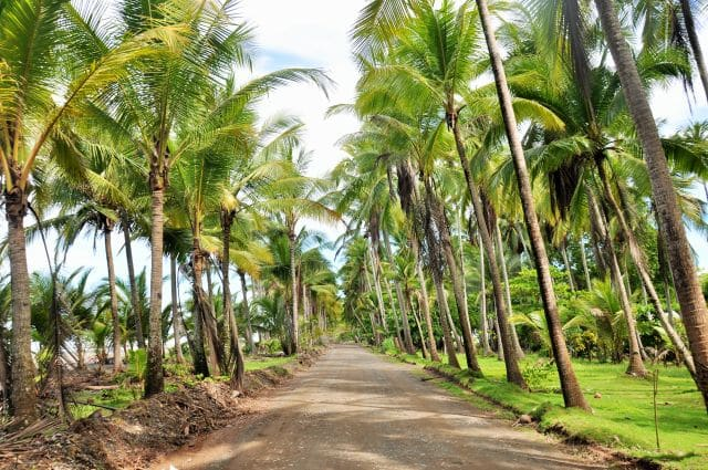 costarica (2502)