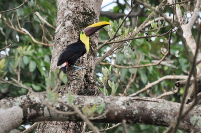 costarica (302)